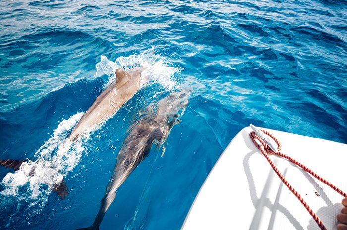 Dhow and Dolphin Cruising