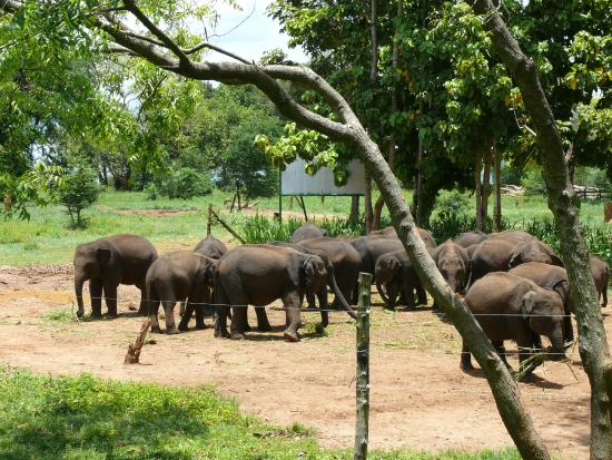 Visit to the Elephant Transit Home